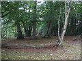 SU9318 : Tumulus at Graffham camp site by E Gammie
