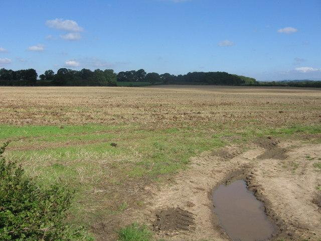 Bishop Monkton Moor