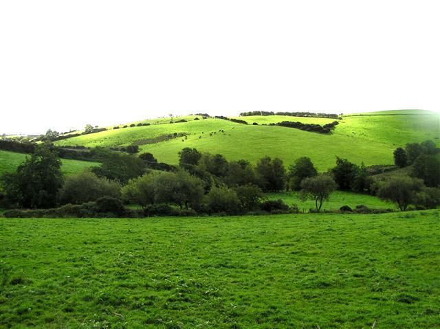 Bockets Hill