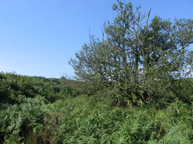 Middle Gill, Bracken Ridge