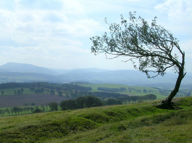 Lonesome Rowan
