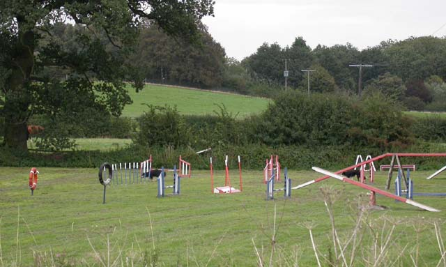Dog Training Area
