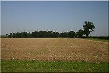 TL9167 : Field and woodland near Pakenham by Bob Jones