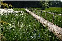 SR9694 : Bosherston Lily Ponds by Jeremy Owen
