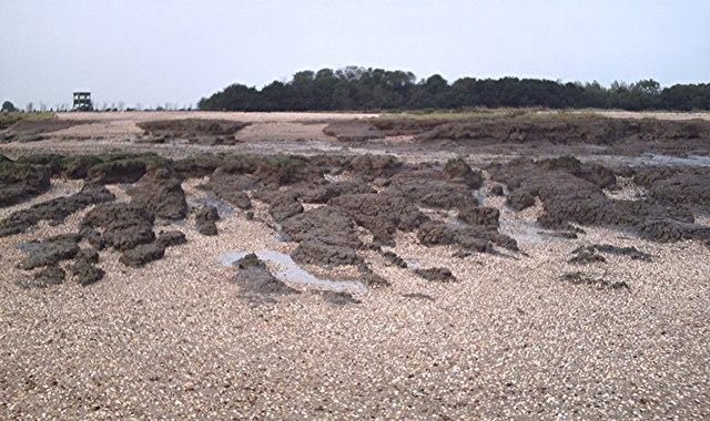 The beach at Tip Head