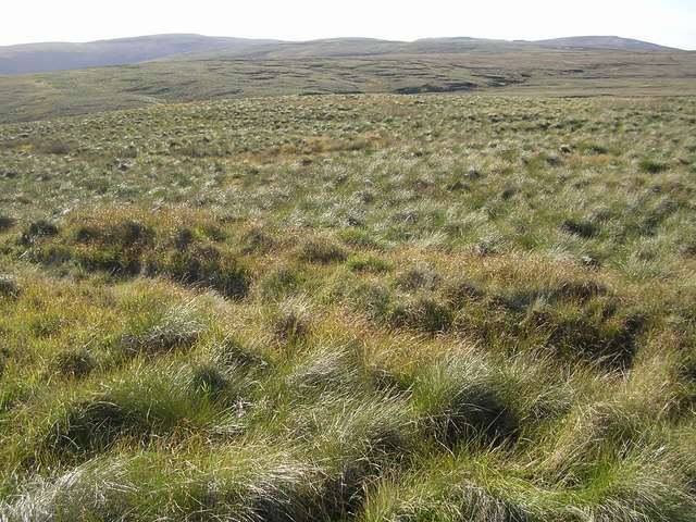 Tussocks Galore, Inner Black Hill