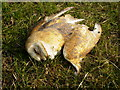 SE7682 : Dead Barn Owl by Phil Catterall