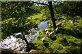 NY6135 : Sunnygill Beck by Charles Rispin