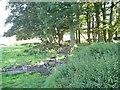 NT5049 : Drinking troughs, Pilmuir by Richard Webb