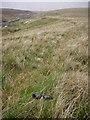 SD6784 : Sheep Wall and Sunglasses Short Gill by Michael Graham