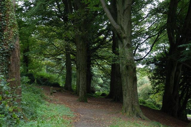 Killynether Wood near Newtownards (2)