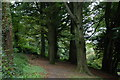 J4772 : Killynether Wood near Newtownards (2) by Albert Bridge