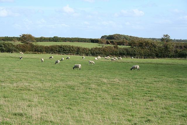 Knowstone: Beaple's Moor