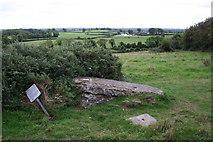N0429 : Carved Stone, Clonfinlough by Bob Embleton