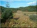 NR7792 : Forest lochan by Patrick Mackie