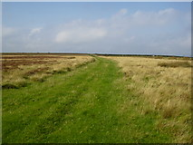 NZ7814 : Grassy Track on moorland near Newton Mulgrave by Phil Catterall