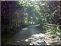 TM3154 : Loudham Hall Road by Geographer
