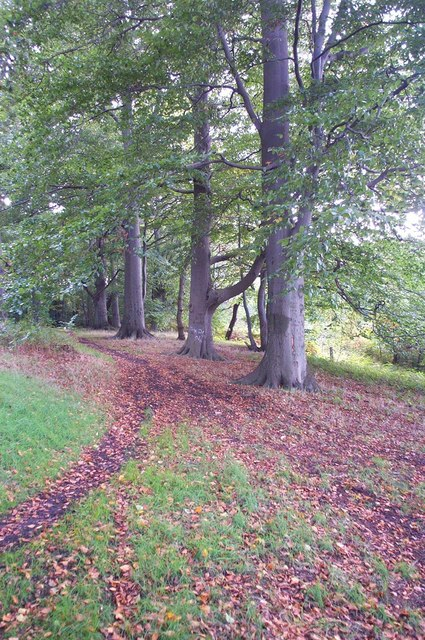 Woodland near Cuckney Hill