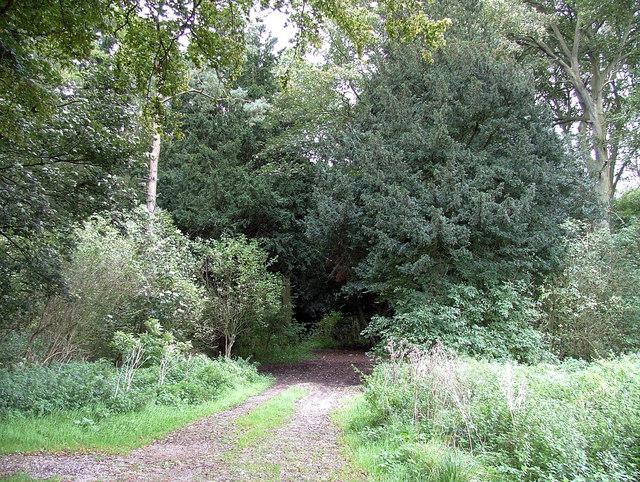 The way into Beacon Wood, Neswick