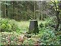 SK3062 : Triangulation pillar, Farley Moor Woods by Nikki Mahadevan