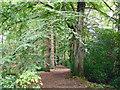 SJ8183 : Wilmslow (Styal) - Styal Woods by Mike Harris