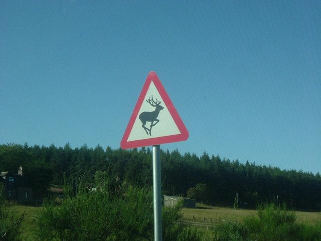 Deer, oh dear!