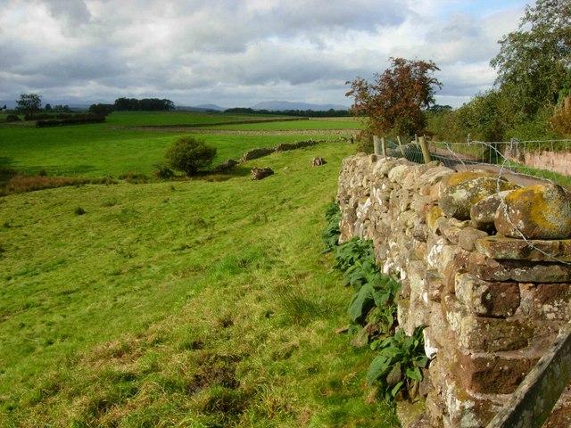 Newbiggin Moor