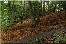 J4681 : Crawfordsburn Glen near Bangor by Albert Bridge
