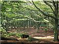 SE1944 : Woodland on Otley Chevin by John Illingworth