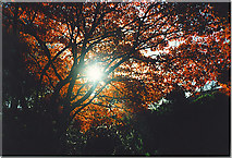 NJ9105 : Trees in Autumn Colour by Colin Smith