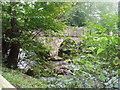 SJ1962 : Loggerheads country Park by Eirian Evans