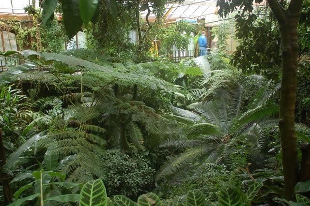 The tropical ravine, Botanic Gardens, Belfast