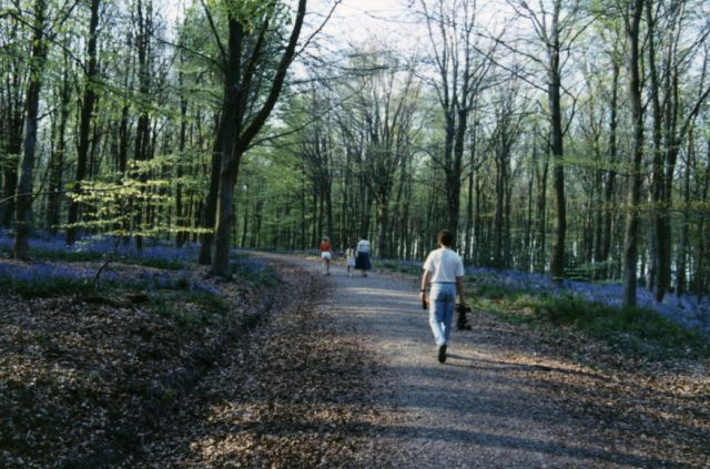 Path through West Woods