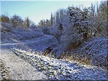 SJ8093 : Path beside Chorlton Brook, Ivy Green by Phil Champion