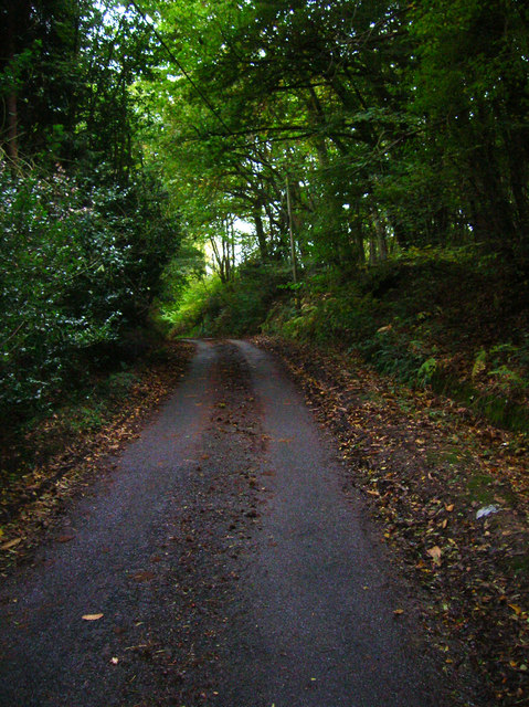 Swanbrook Lane, Pickly Wood