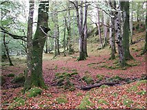 NM4339 : Glade on Ulva by Rob Farrow