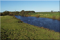 SE3766 : River Ure, Roecliffe by Chris Heaton