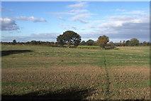 SE3265 : Footpath heading towards Bishop Monkton by Chris Heaton