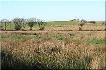 SS7237 : North Molton: towards Setta Barrow by Martin Bodman