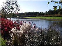 TL8425 : Markshall lake by Simon Leatherdale