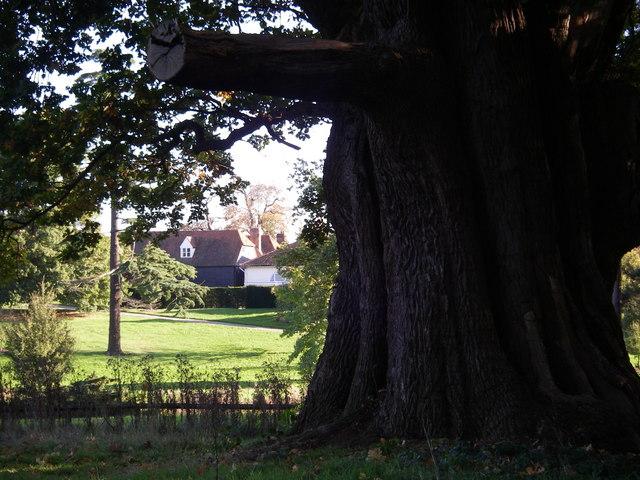 The great Markshall oak.