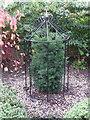 NZ1131 : Millennium Yew : Hamsterley Community Garden by Hugh Mortimer