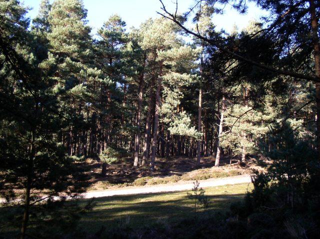 Woodland near Arne