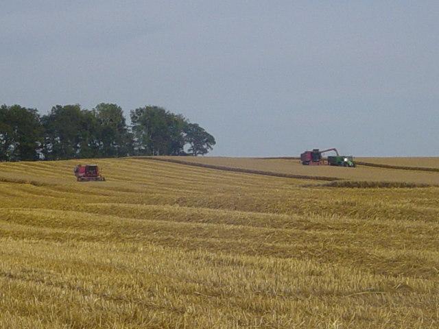 Harvest on Pitkerrie Farm