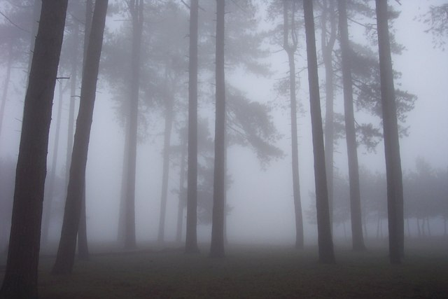 Mist in the trees on May Hill