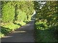 TF8907 : A Lane To Ashill Road by Roger Gilbertson