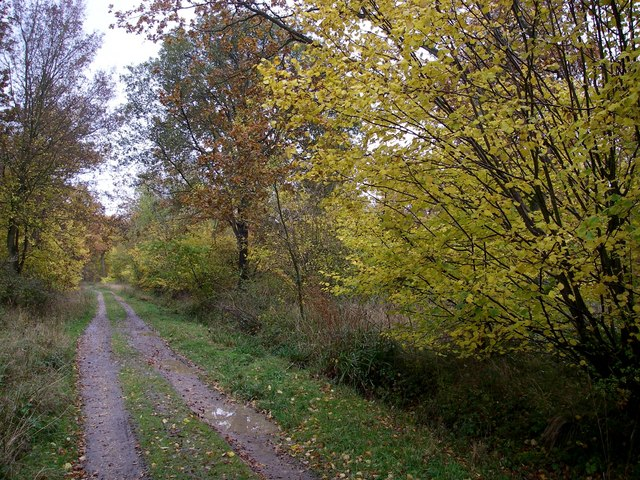 Rowney wood main ride.