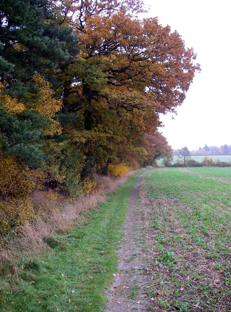 Where arable and woodland meet.