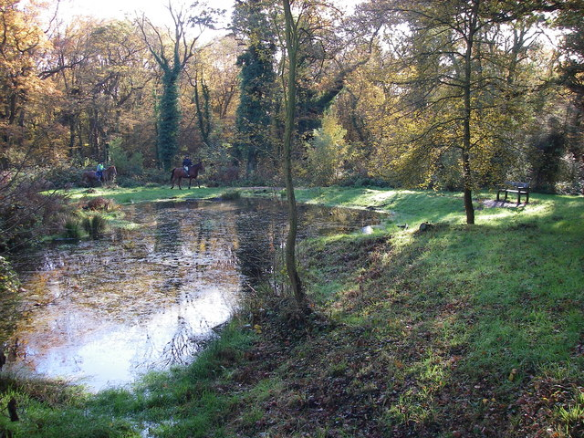 Sheep Water Pond, Hainault Forest