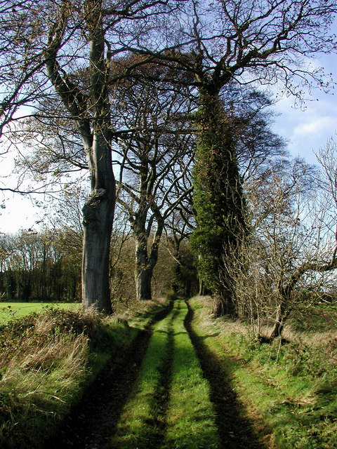 Welton Wold